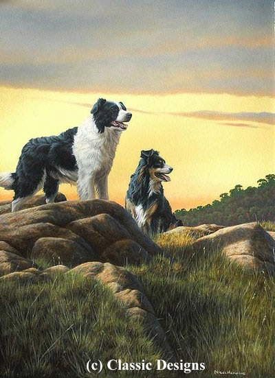 Border Lands - Border Collies by Nigel Hemming