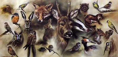 british-wildlife-3939