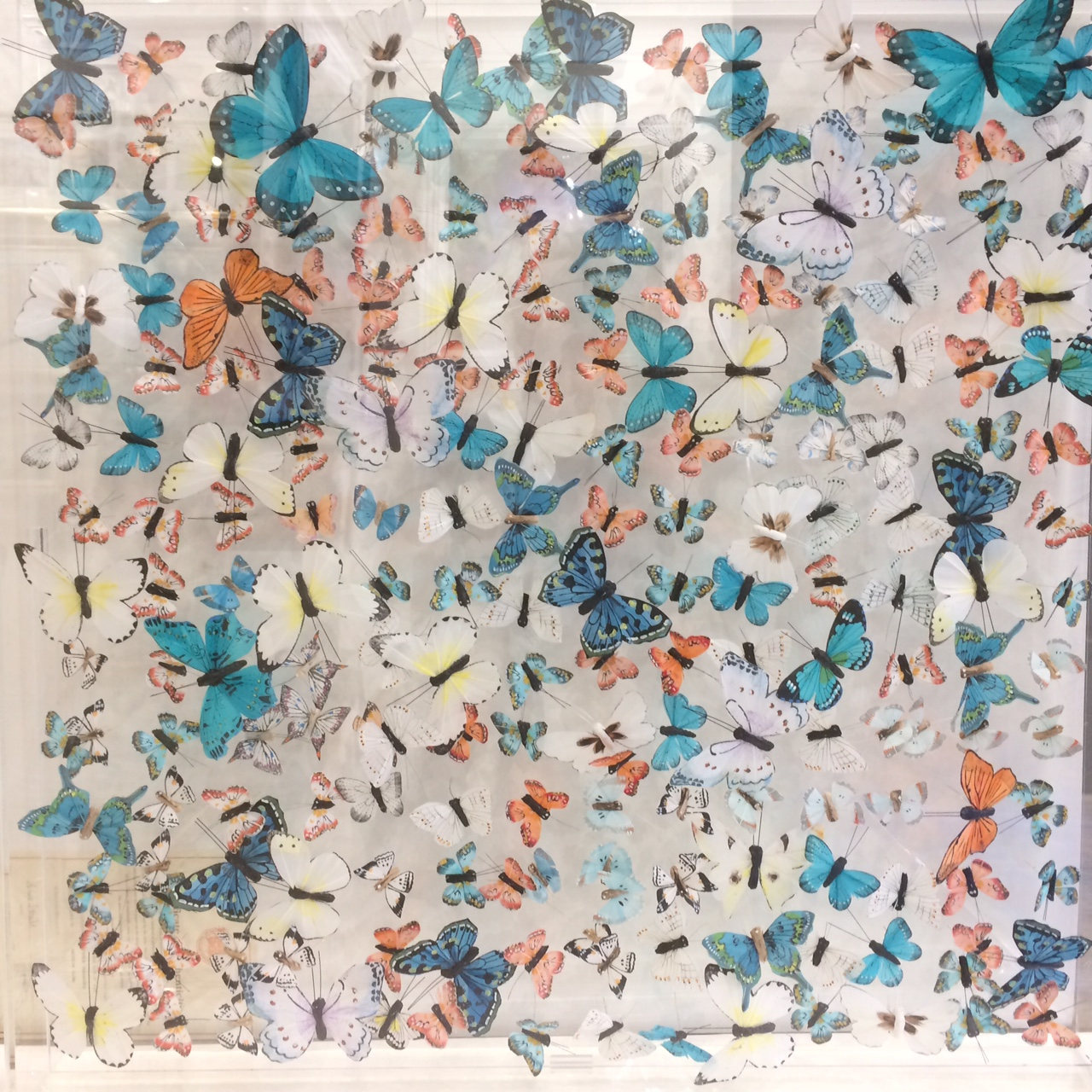 Butterfly Installation 750 x 750 by Michael Olsen