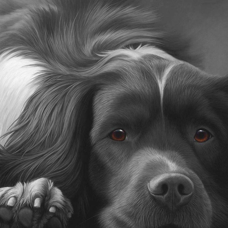Dog Tired English Springer by Nigel Hemming