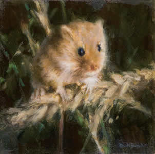 Harvest Mouse by David Shepherd