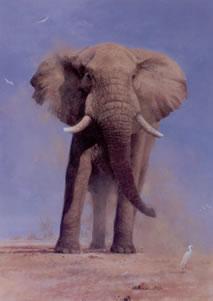 My Savuti Friend - Elephant by David Shepherd