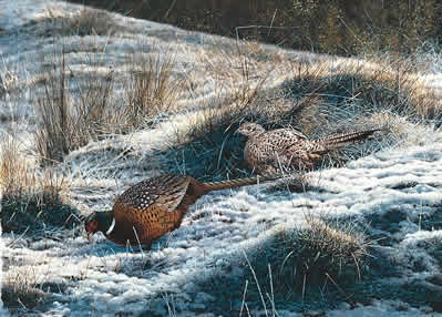 Pheasants - First Fall by Steven Townsend
