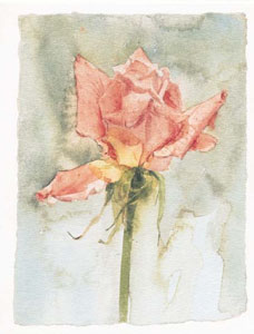 pink-rose-2582