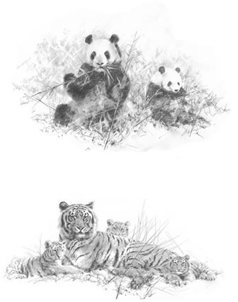 Portfolio Set II - Pandas & Tigers (Set of 2) by David Shepherd