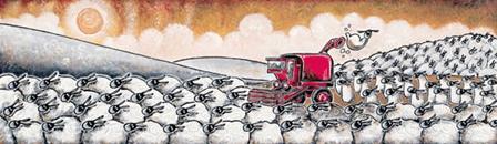 Sheep Harvest by Philip Stuttard
