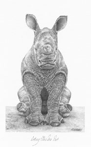 sitting-this-one-out-rhino-1361