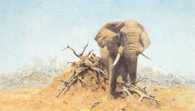 The Gentle Giant by David Shepherd