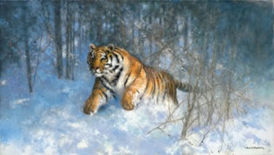 Tiger In The Snow by David Shepherd