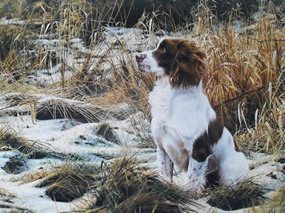 Tribute To Dash - Springer Spaniel by Steven Townsend