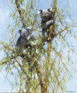 Up A Gum Tree - Koalas by David Shepherd