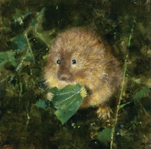 Water Vole by David Shepherd
