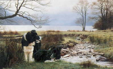 Working Pair - Border Collies by Steven Townsend