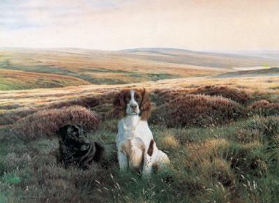 Workmates - Springer & Labrador by Steven Townsend