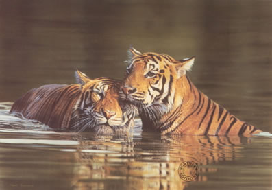 affection-tigers-5116