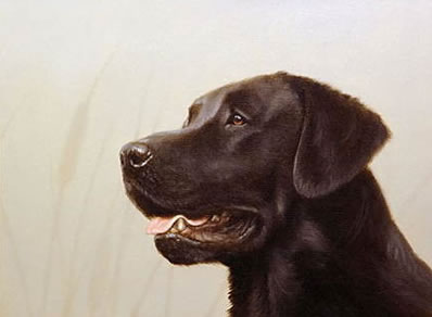 Black Lab Head Study (Self Publish)