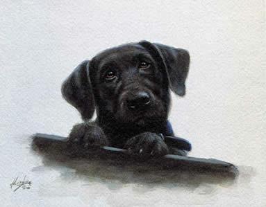 Black Lab Pup Study