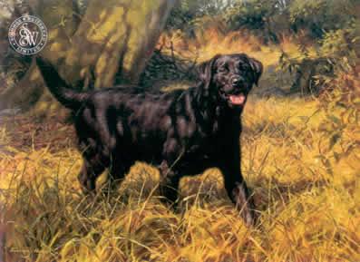 black-labrador-3722