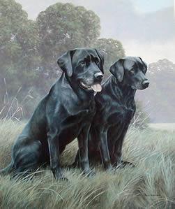 black-labradors-1530