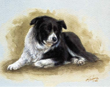 Border Collie Study