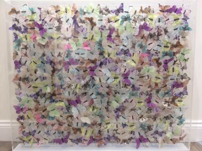 Butterfly Installation 1100 x 900