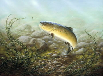 Country Sports Brown Trout