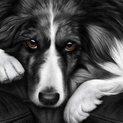Dog Tired Border Collie
