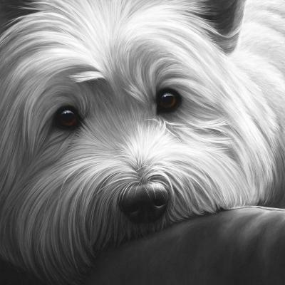 dog-tired-west-highland-terrier-15284