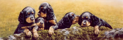 dont-tell-the-others-gordon-setter-pups-4284