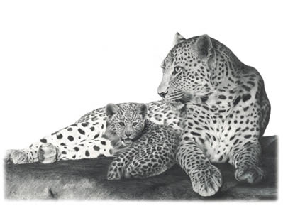 Fearless- Leopards