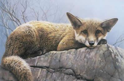 first-winter-fox-4286