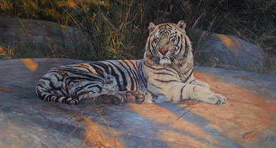 great-white-tiger-2512