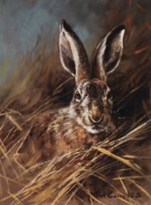 head-of-a-hare-4039