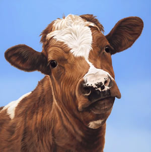 how-now-brown-cow-7602