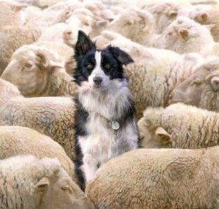 i-see-no-sheeps-17458
