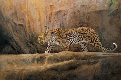 leopard-at-bushman-rock-3281