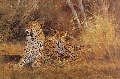 leopard-cub-3280