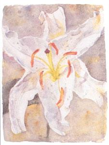 lilly-study-iii-2638