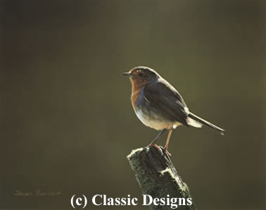 morning-glory-robin-7223