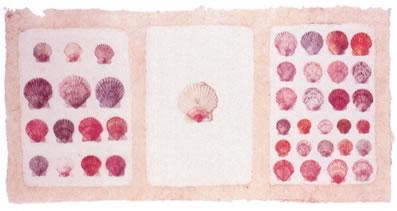 pink-shells-2597