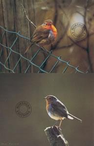 robins-set-of-2-1240