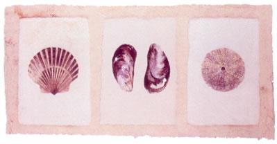sea-shells-2598