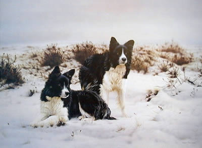 snow-search-1224