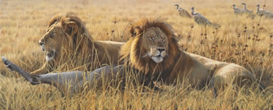 the-coalition-lions-7099