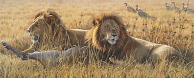 the-coalition-lions-canvas-7100