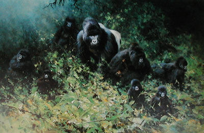the-mountain-gorillas-rwanda-gorilla-2890