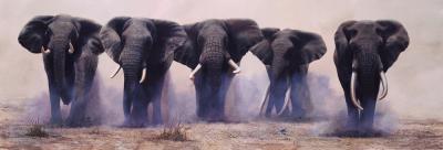 the-wild-bunch-17227