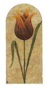 treasured-tulips-2782