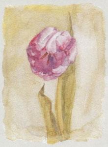 tulip-iii-2590
