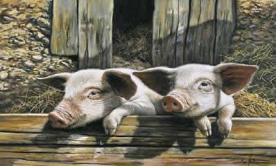 twins-pigs-4288